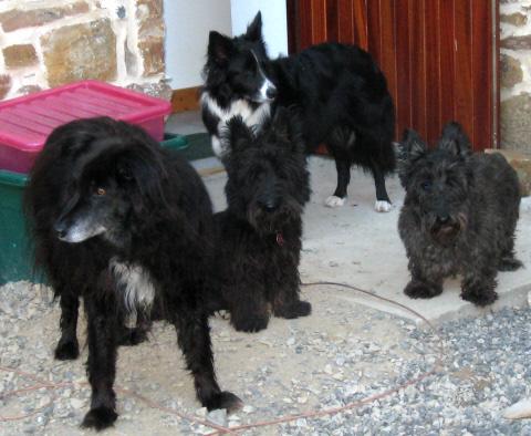 left to right - Taz, Ben, Bess, Scottie