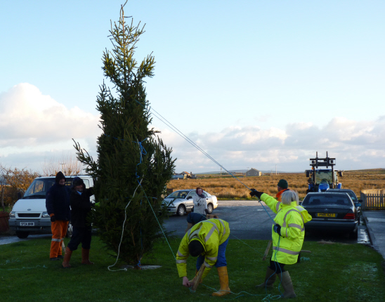 Flotta Christmas tree goes up