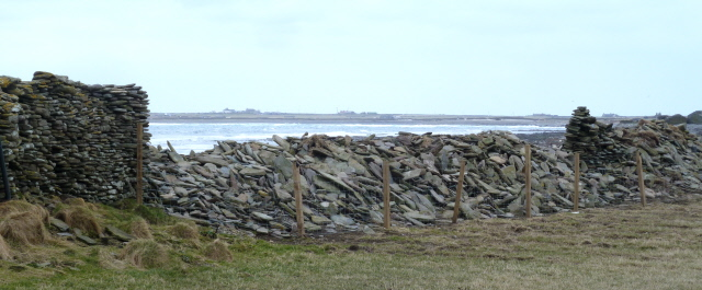 North Ronaldsay east dyke down and new fence