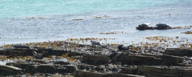 six seals