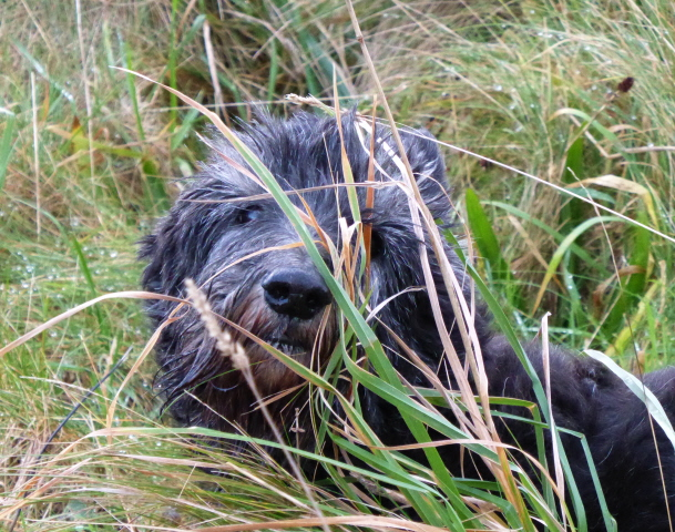 08. smelling the grass