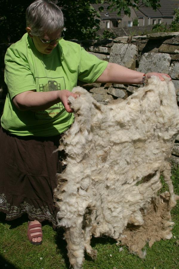 Assessing a Fleece 002