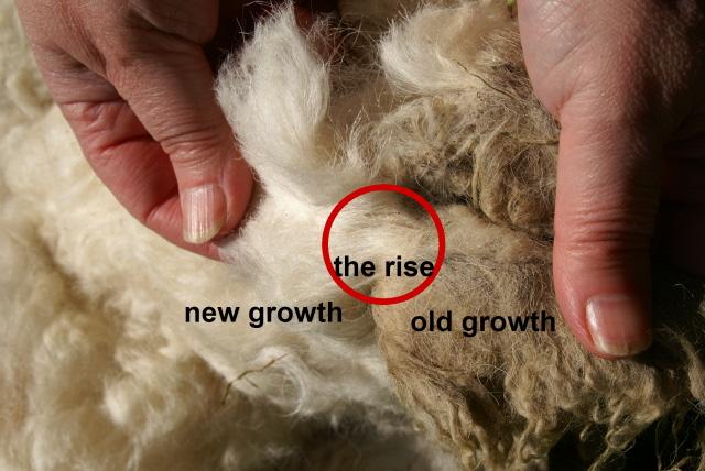 Assessing a Fleece 005