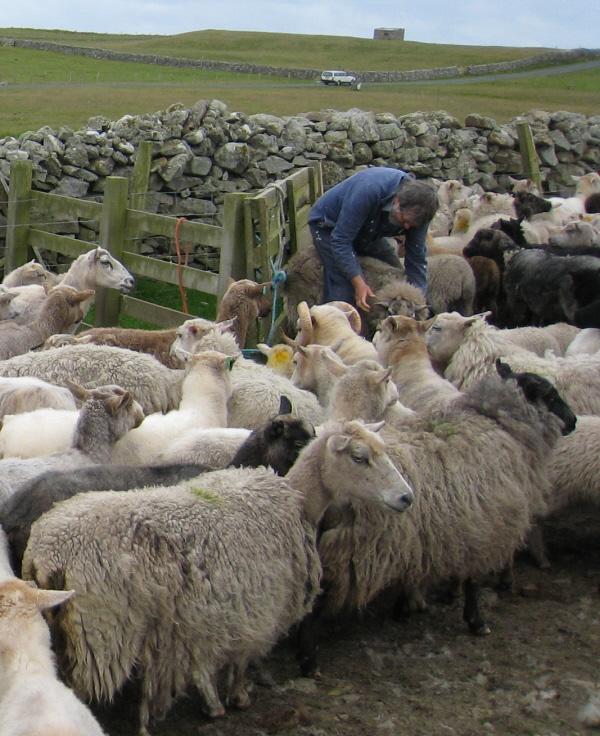 Assessing a Fleece 010