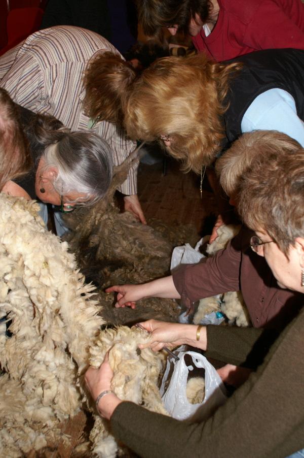 Assessing a Fleece 011