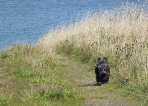 One of his favourite walks, in summer...