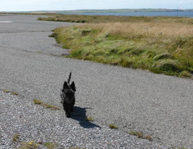 Dog Blog 1 004