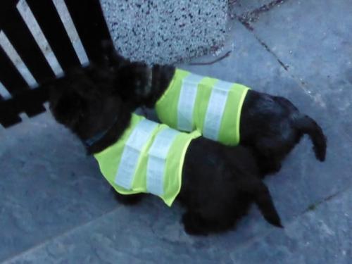 Dog Blog 1 011