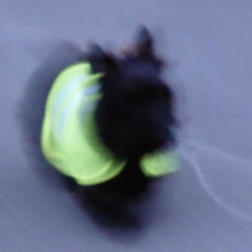 Dog Blog 1 013