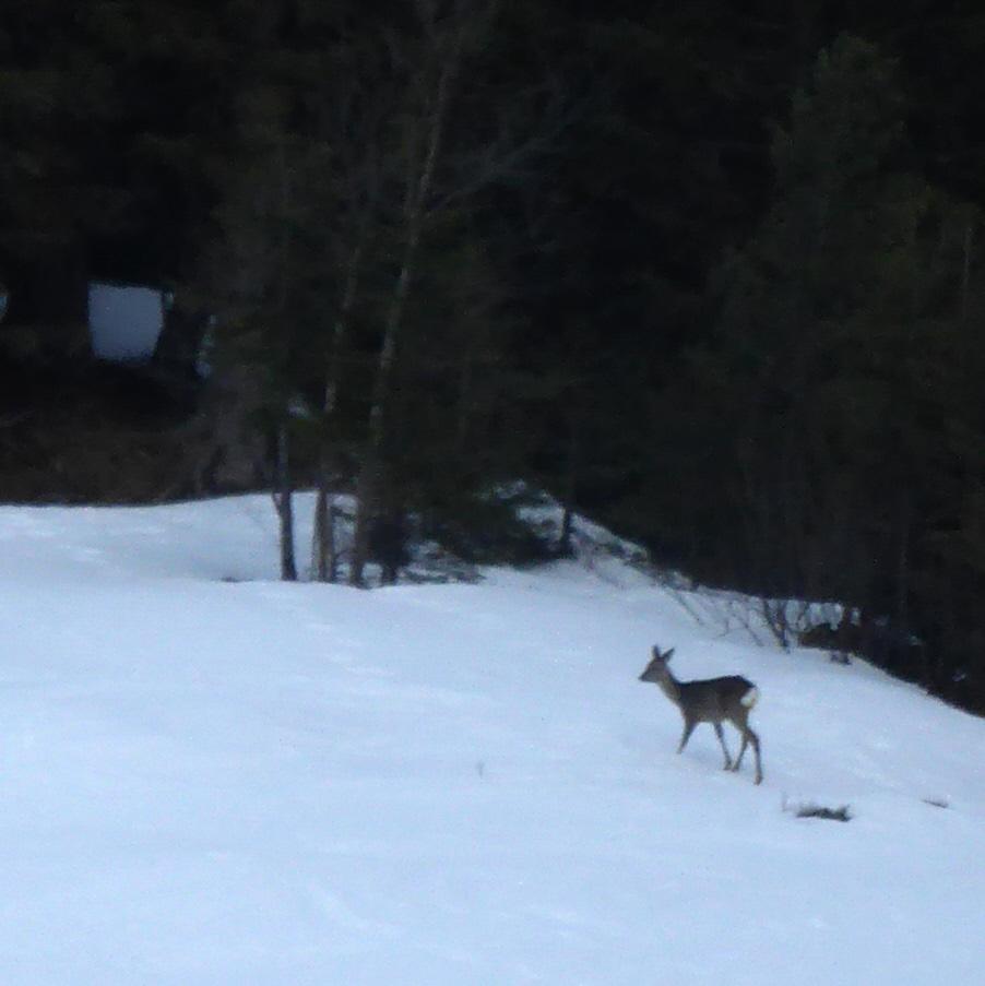 003 deer