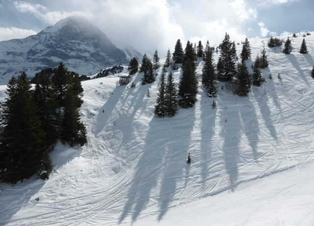 008 tree shadows and Eiger