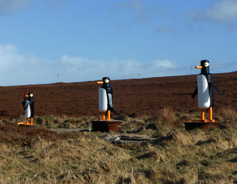 The Flotta Penguins. Made by Tam out of bits and pieces, and repainted a couple of years ago by Stewart! They stand looking out towards Fara.