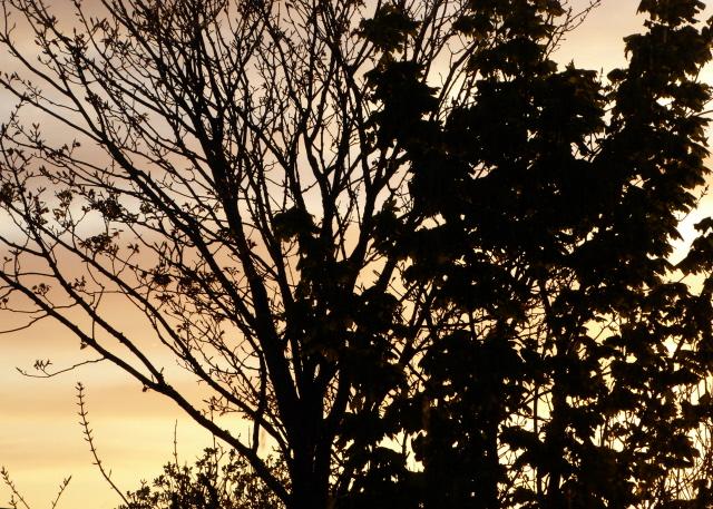 Orkney Sunset 003