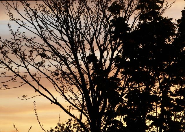 Orkney Sunset 004