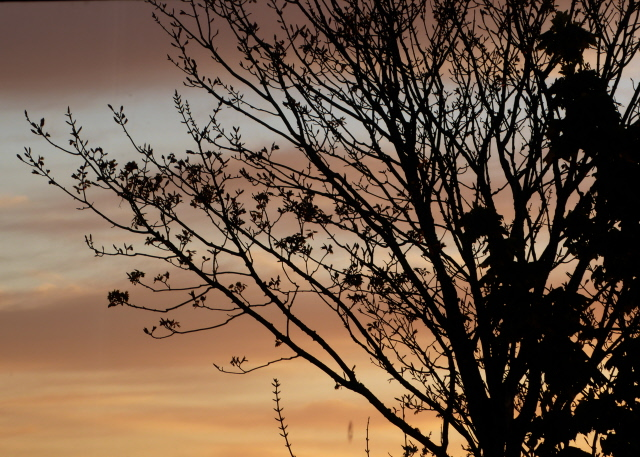 Orkney Sunset 005