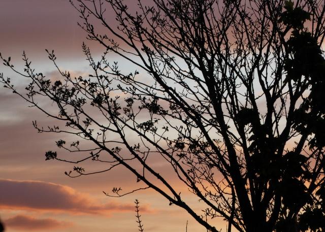 Orkney Sunset 006