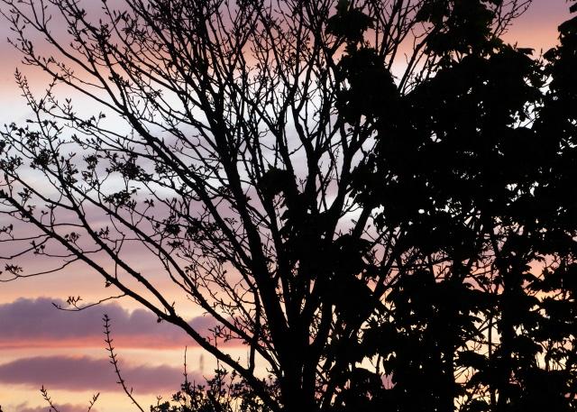 Orkney Sunset 007