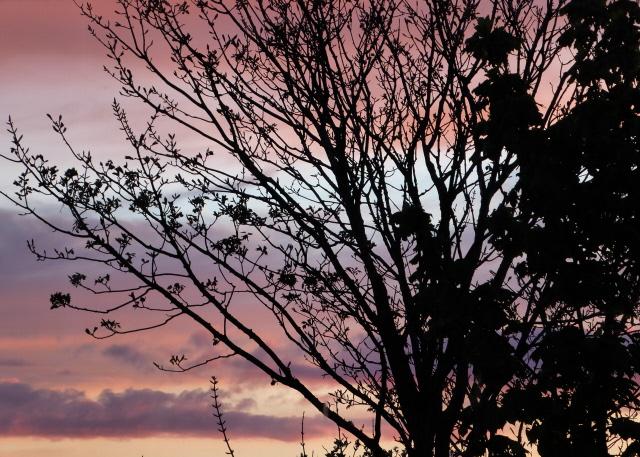 Orkney Sunset 008
