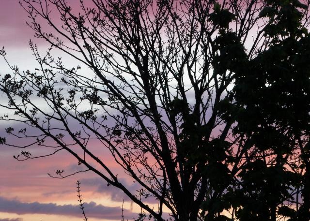 Orkney Sunset 009