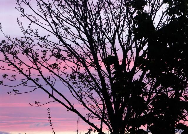 Orkney Sunset 010