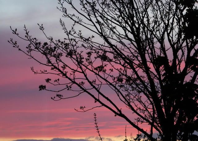 Orkney Sunset 011
